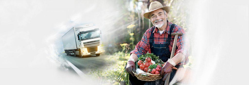 Importância do distribuidor de verduras em SP